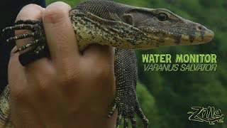 Zilla Water Monitor