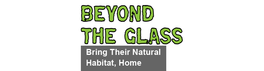 Go Beyond The Glass With Zilla Reptile And Amphibian Care Videos