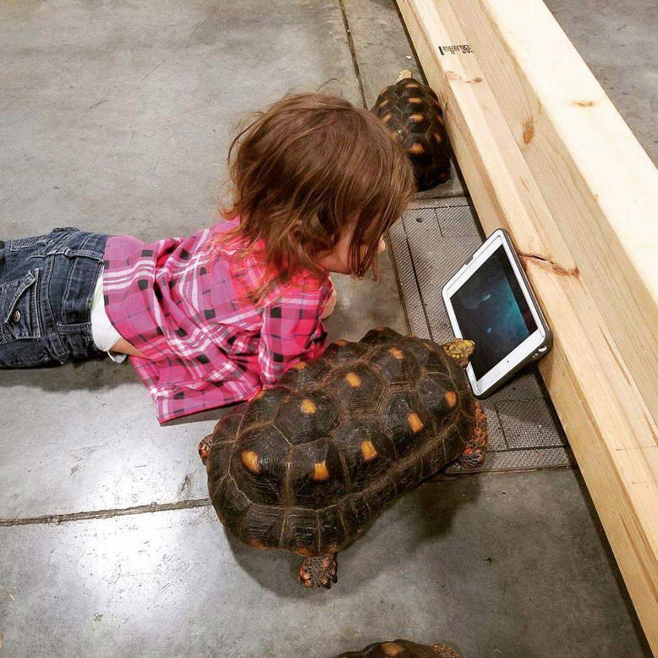 little girl with tortoises watching tablet screen together