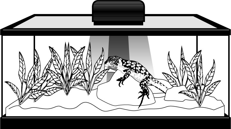 Drawing of lizard in zilla terrarium showing red colored heat rays and yellow colored light rays