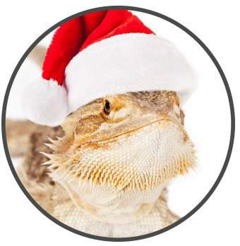 bearded dragon wearing a santa hat