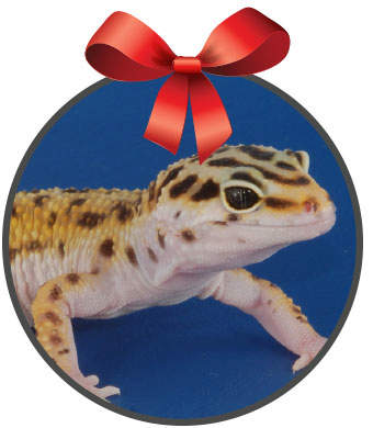 leopard gecko with a red bow on top