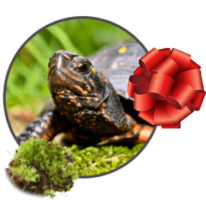 turtle in the grass with a red bow on the right side