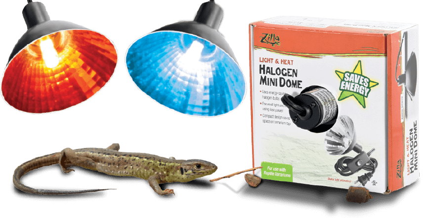 Pet Lizard next to energy saving heat halogen mini dome light