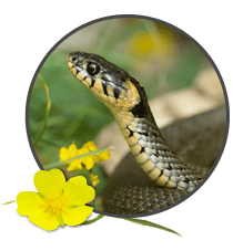 Snake Highlight Image. Snake
