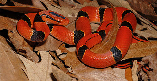 Snakes Reptile Pet Types Zilla