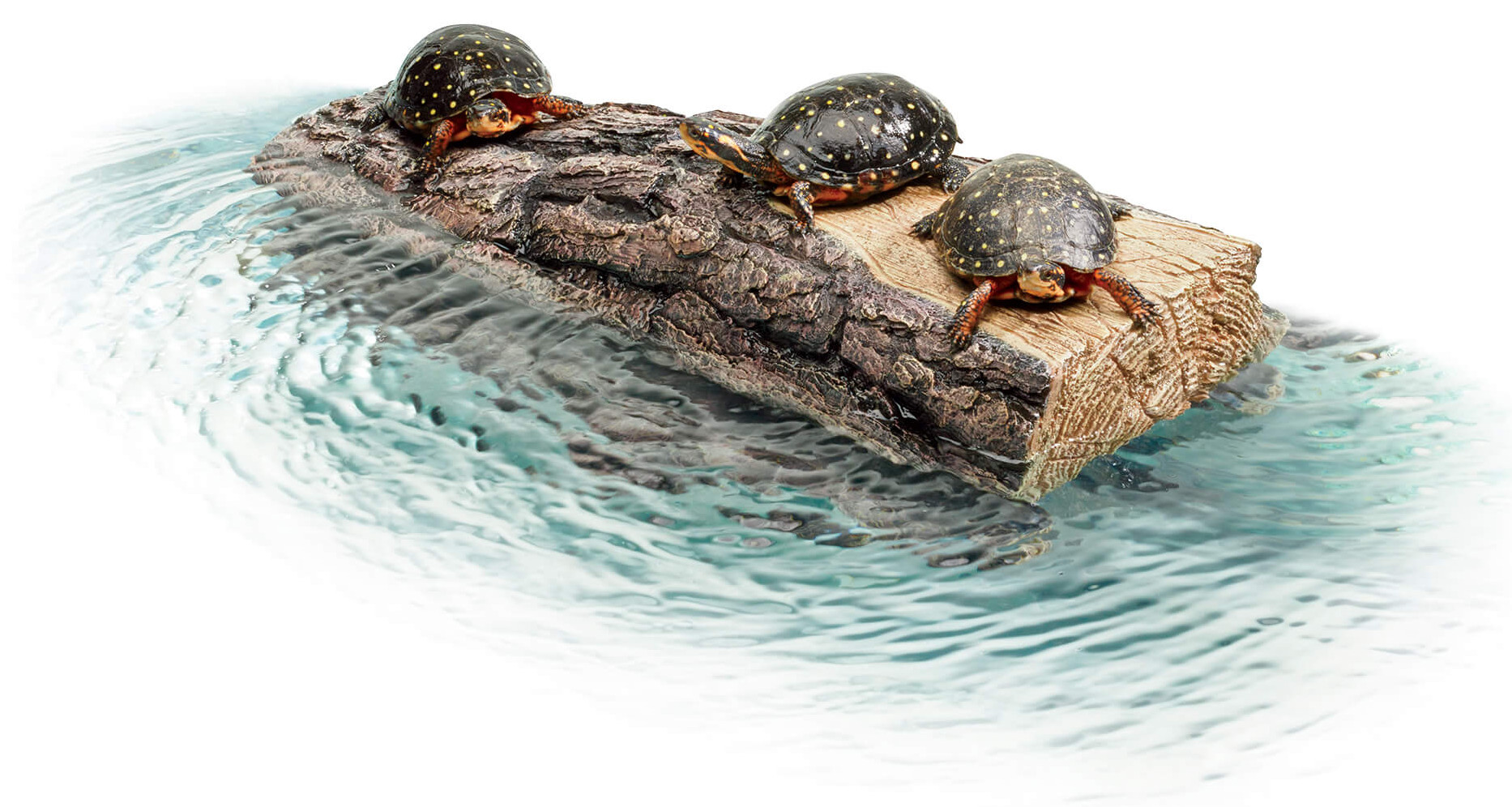 log on water with turtles floating on it
