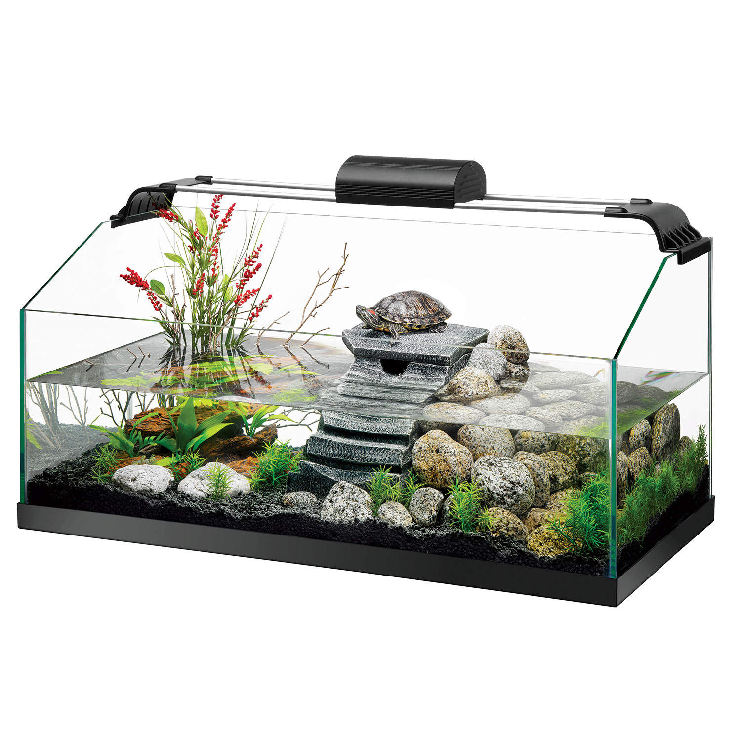 aquatic turtle basking on platform inside decorated premium turtle kit filled with water