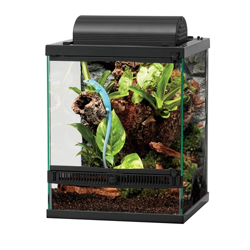 12x12x15 front opening terrarium decorated and with lizard